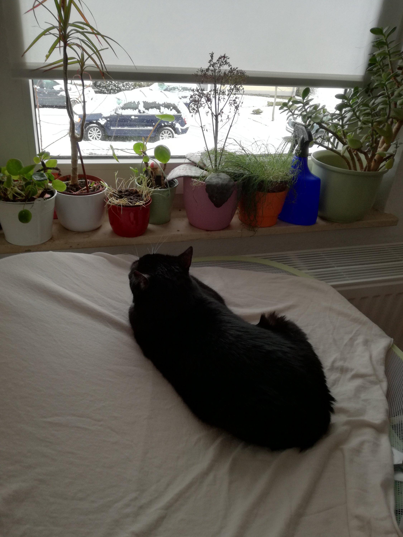 Katze schaut sich Winterlandschaft an