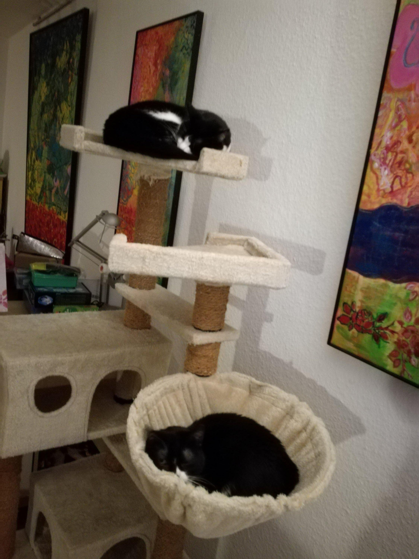 Das Foto zeigt schlafende Katzen im Kratzbaum