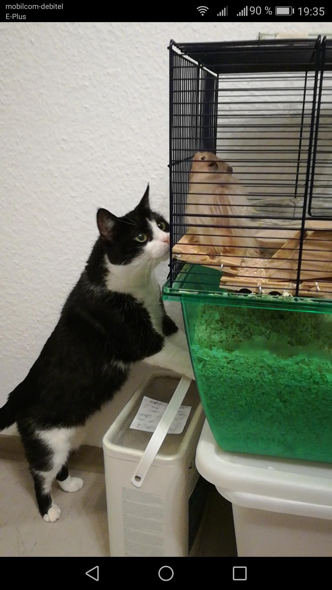 Die neugierige Katze schaut in den Käfig
