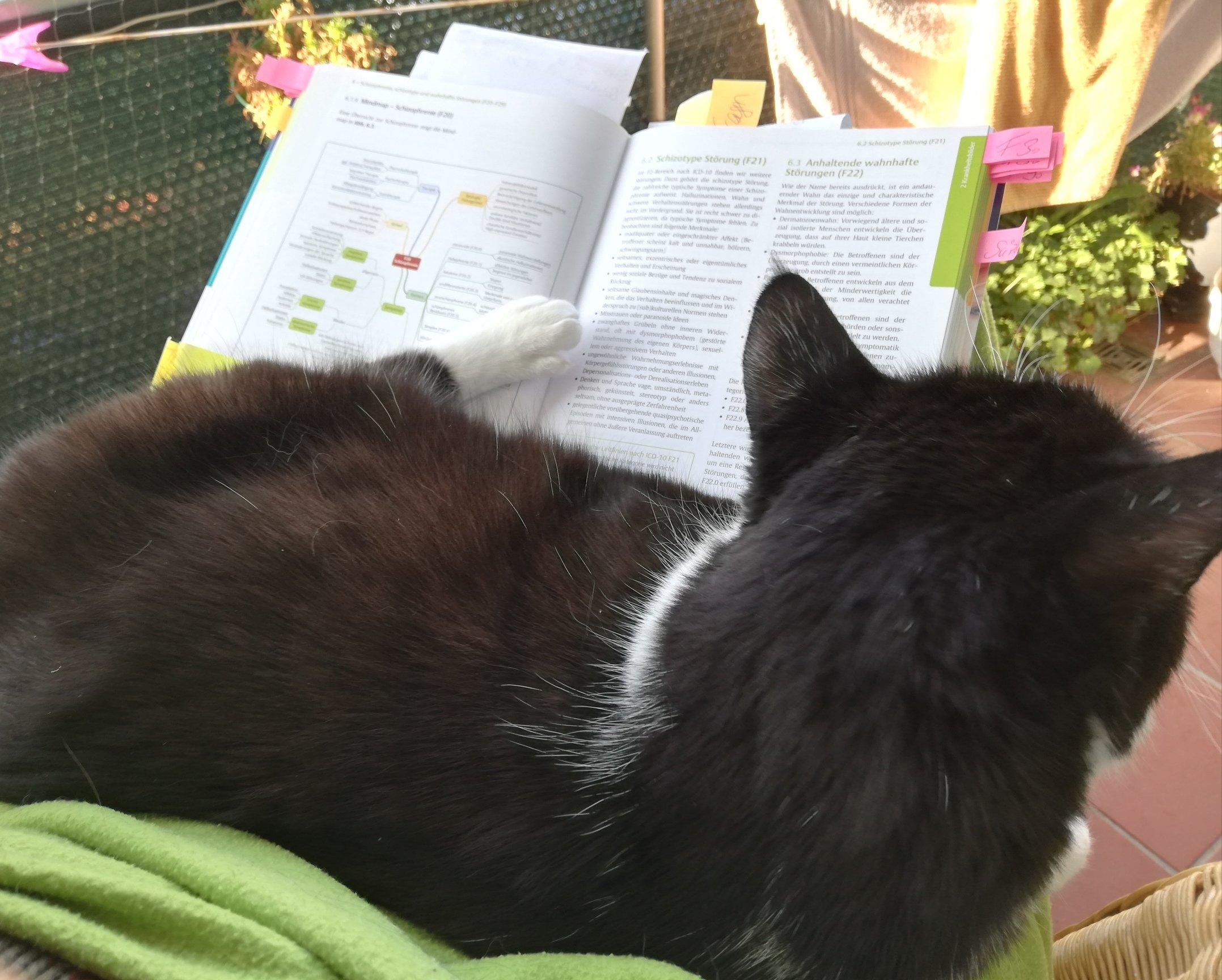 Lernende Katze